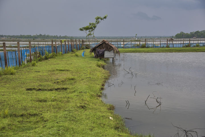 Development of Climate Resilient Sustainable Shrimp Value Chain in Bangladesh